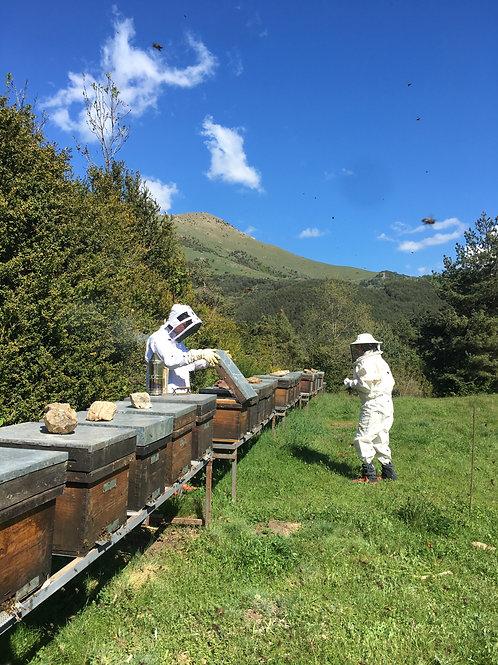 Experiència apiturística  - ADULT -  +15anys