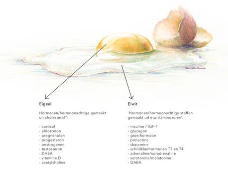 Eiwitten &Aminozuren