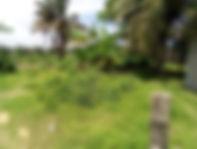 SPHS Land6.jpg