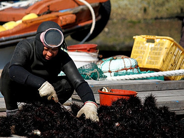 Slow Fish 바다맛기행 : 통영 매물도 성게미역국