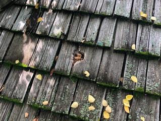 Roof Repair Johnson County