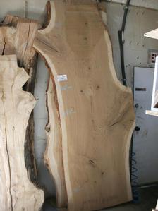White Oak [A92030]