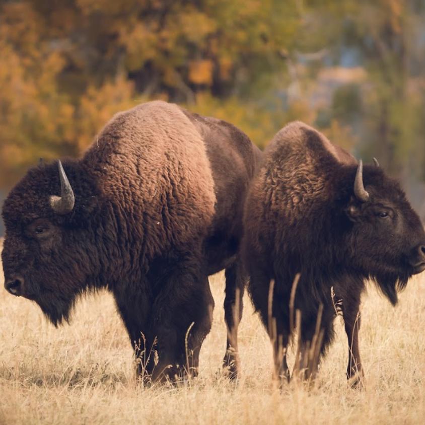 Native American Fauna