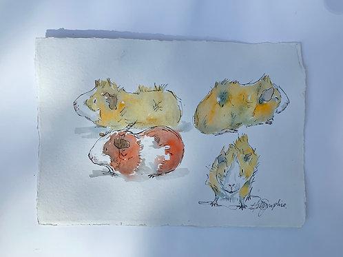 Guinea Pig Studies i