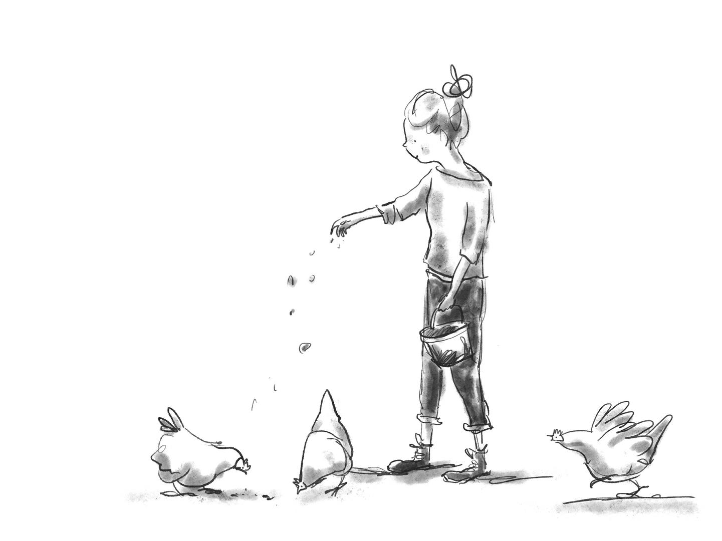 Feeding Chooks