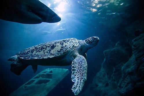 Online Animal Life Drawing -  National Marine Aquarium