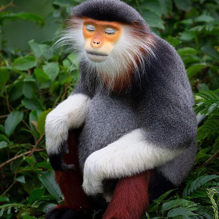Primate Portraits