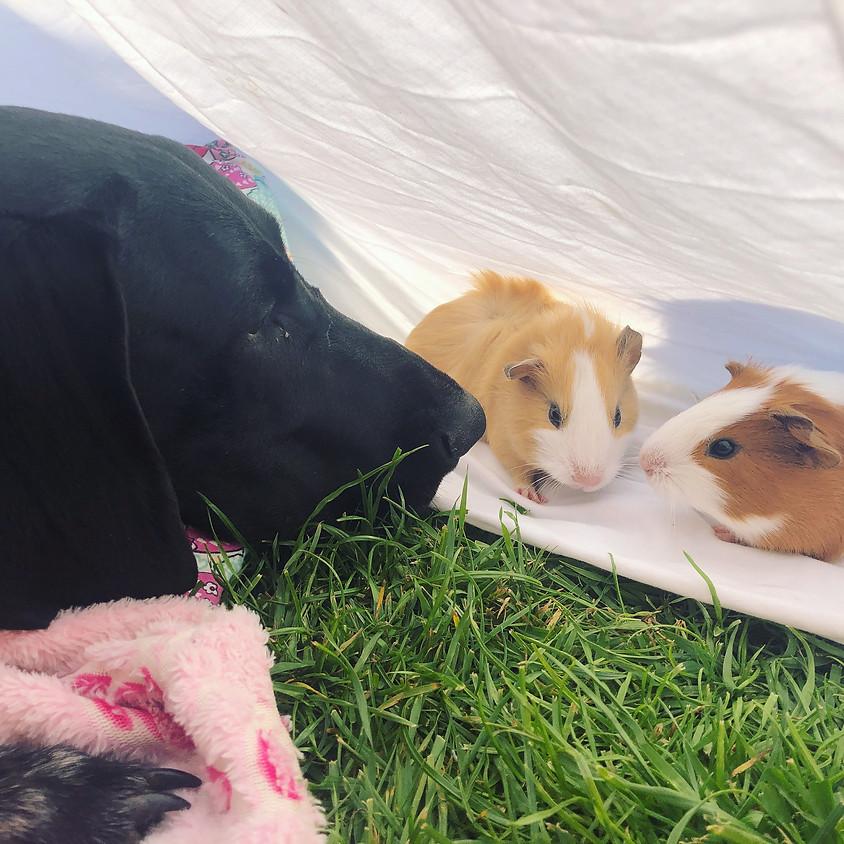 Painter & the Piggies!