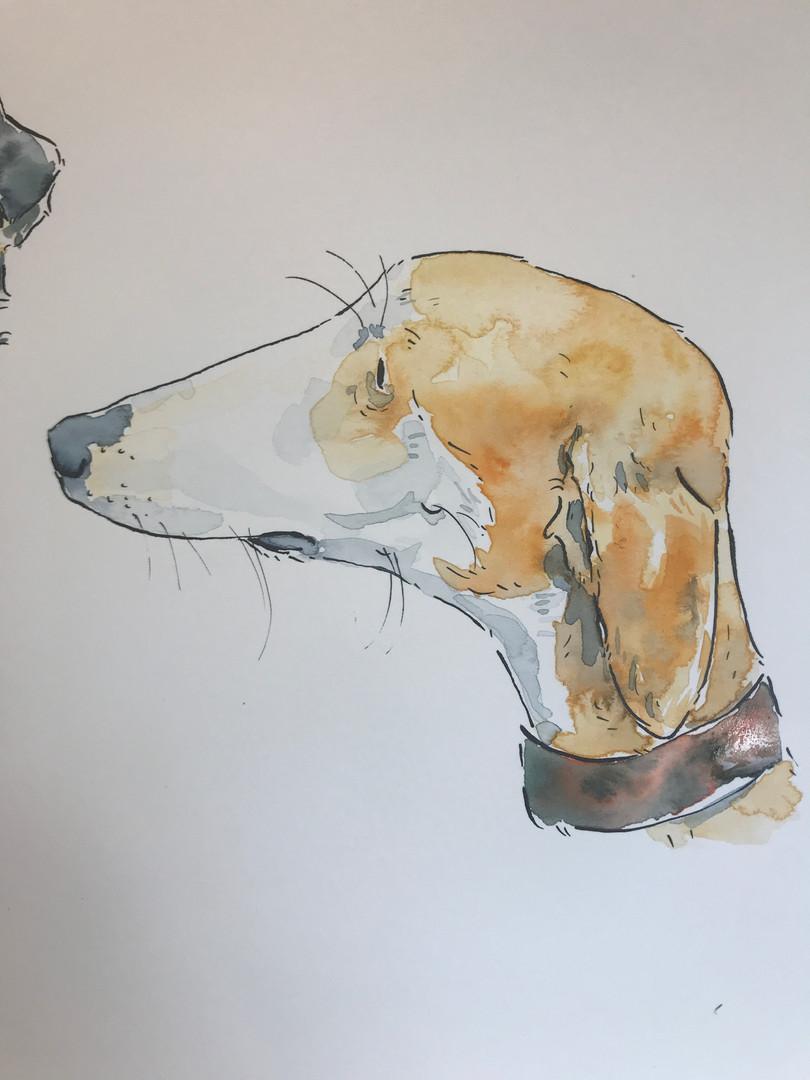 Illustrated hound