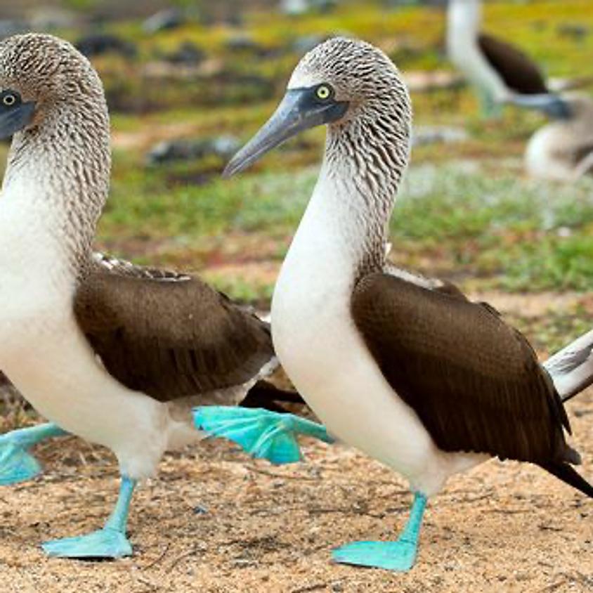 Galapagos Islands Safari (SATURDAY)