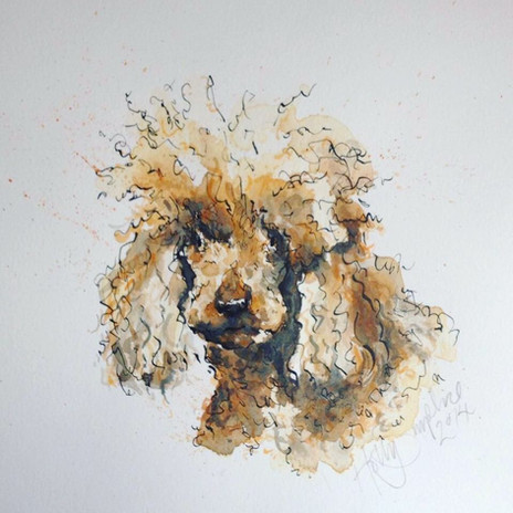 Illustrated Poodle