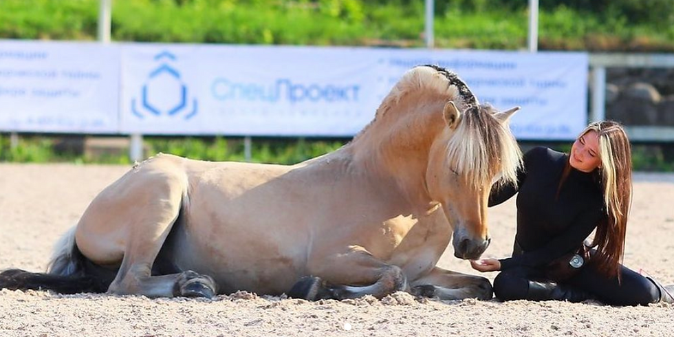 FJORD HORSES LIVE FROM RUSSIA!