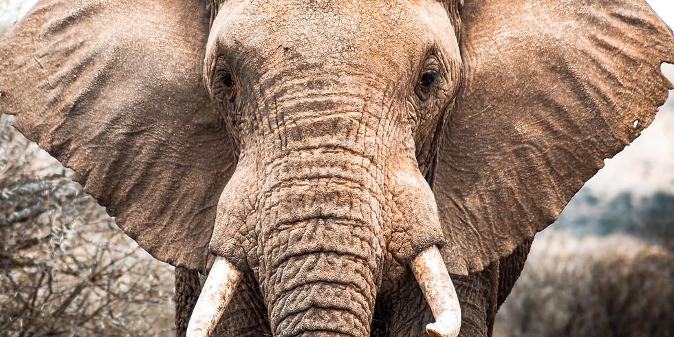ELEPHANT...& RHINO IN THE ROOM!