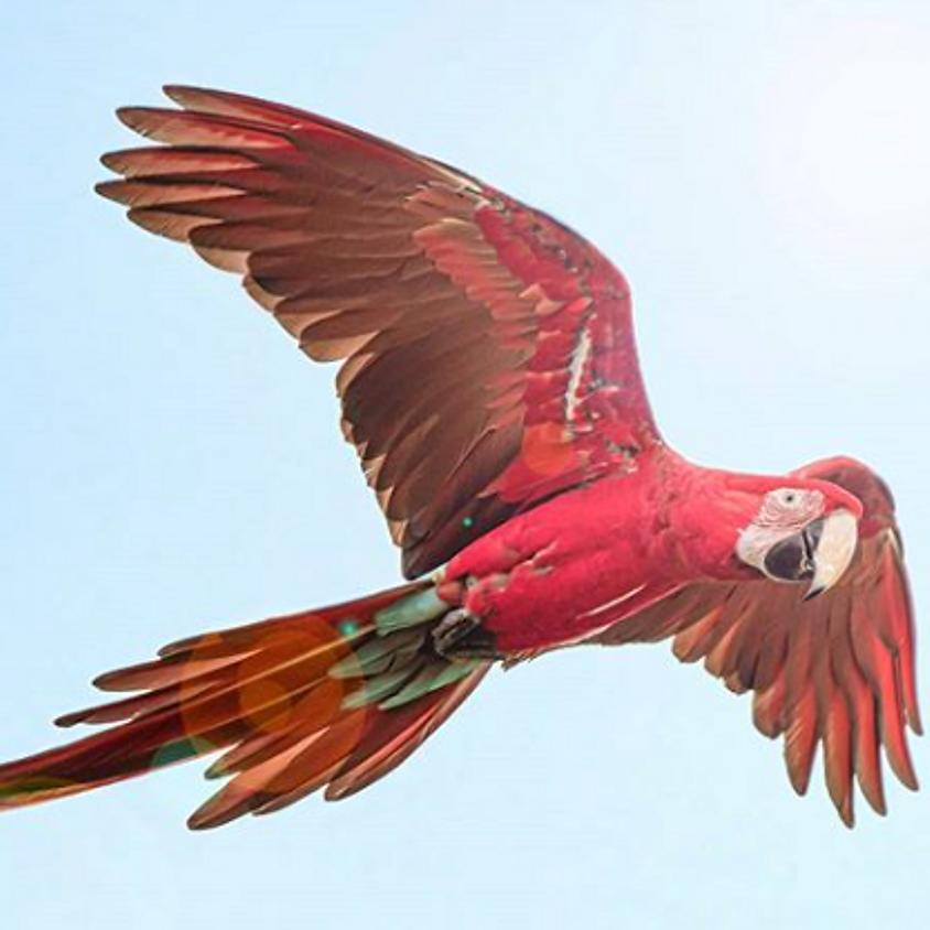 Parrots Galore!