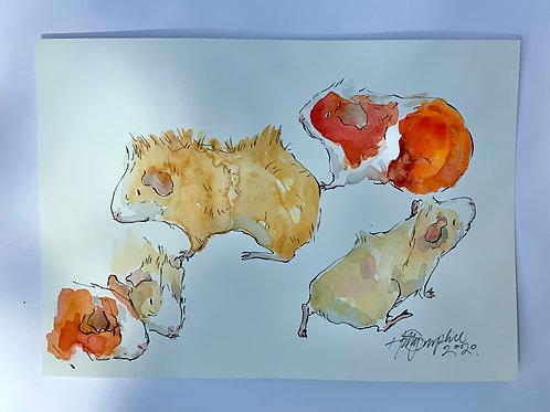 Guinea Pig Studies ii