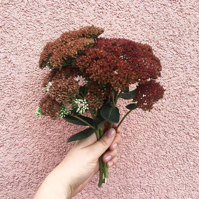 Eine Hand hält einen Blumenstrauß vor eine rosa Wand