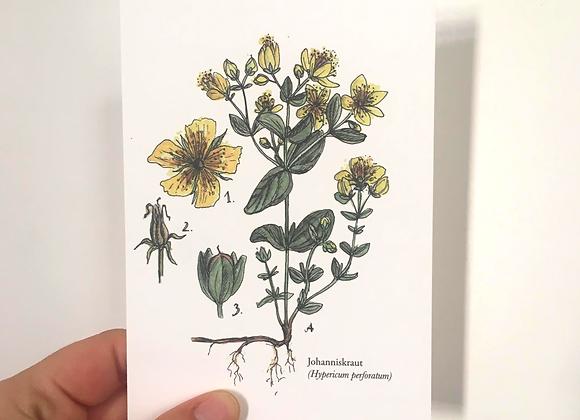 Postkarte 'Joahnniskraut'