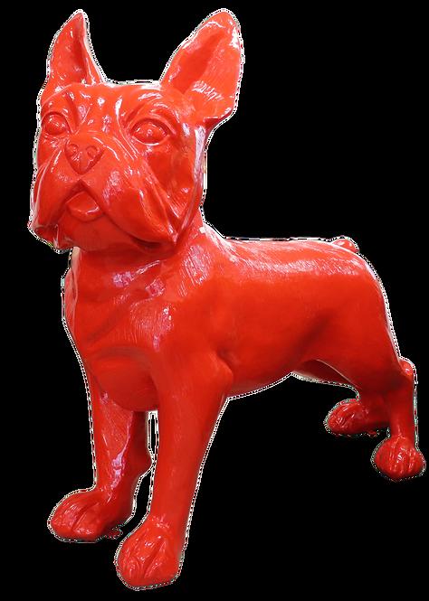 Boston Terrier large