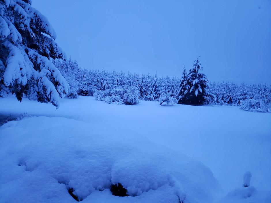 On a Quiet Street in Winter