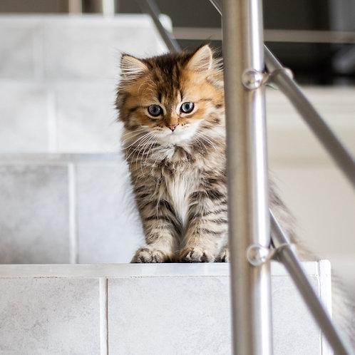 New Kitten Box