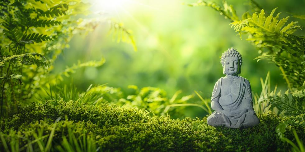 Yoga am Morgen - live stream - Kurs