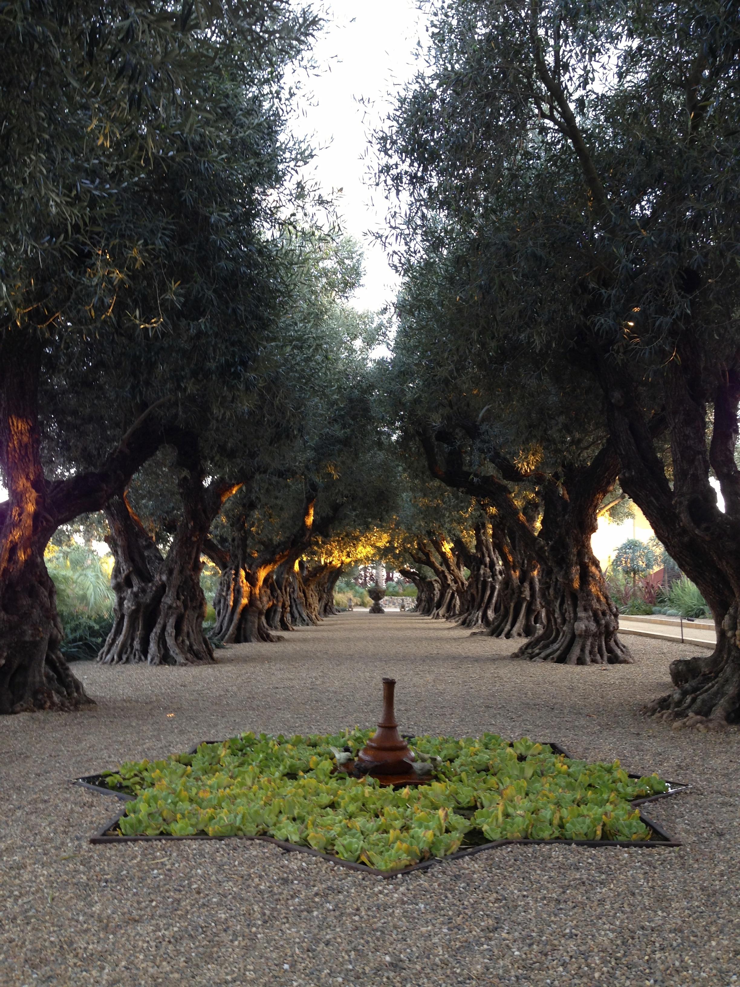 Olive Grove Private Estate Sonoma