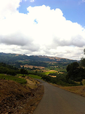 Hilltop view of Sonoma valley and vineyards