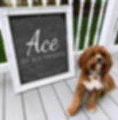 SCHEN Ace Chalkboard.png