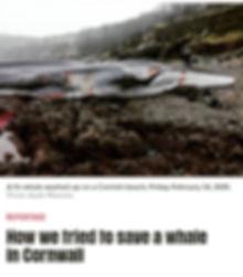 whale article.jpg