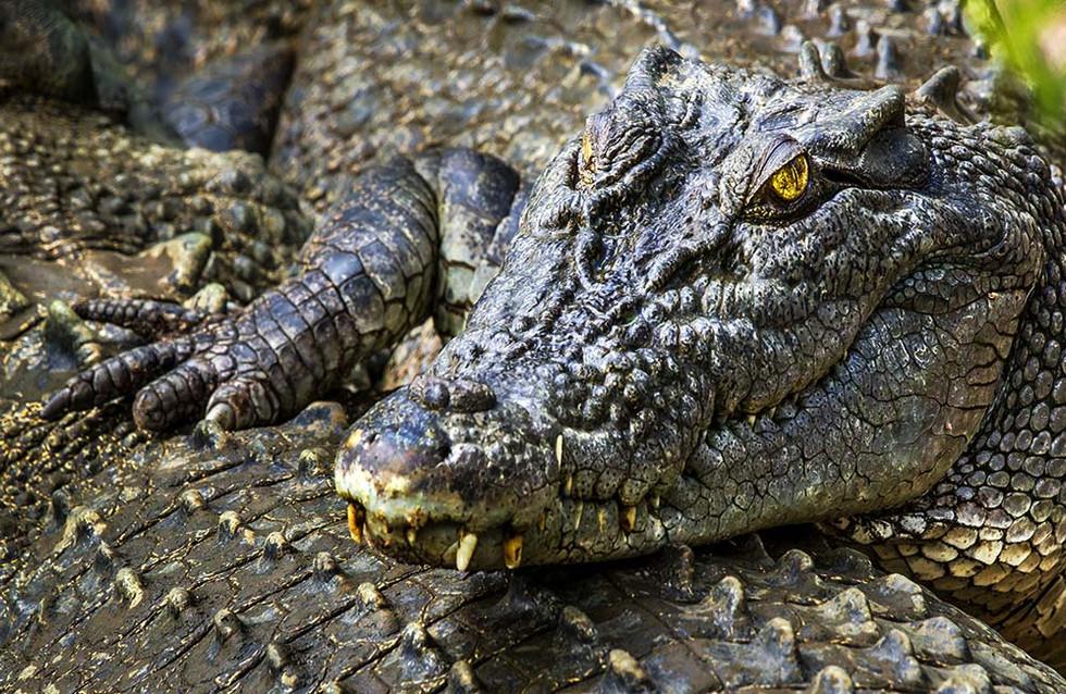 NT-Darwin.Crocodylus-02941.jpg