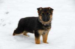 Michaela puppy