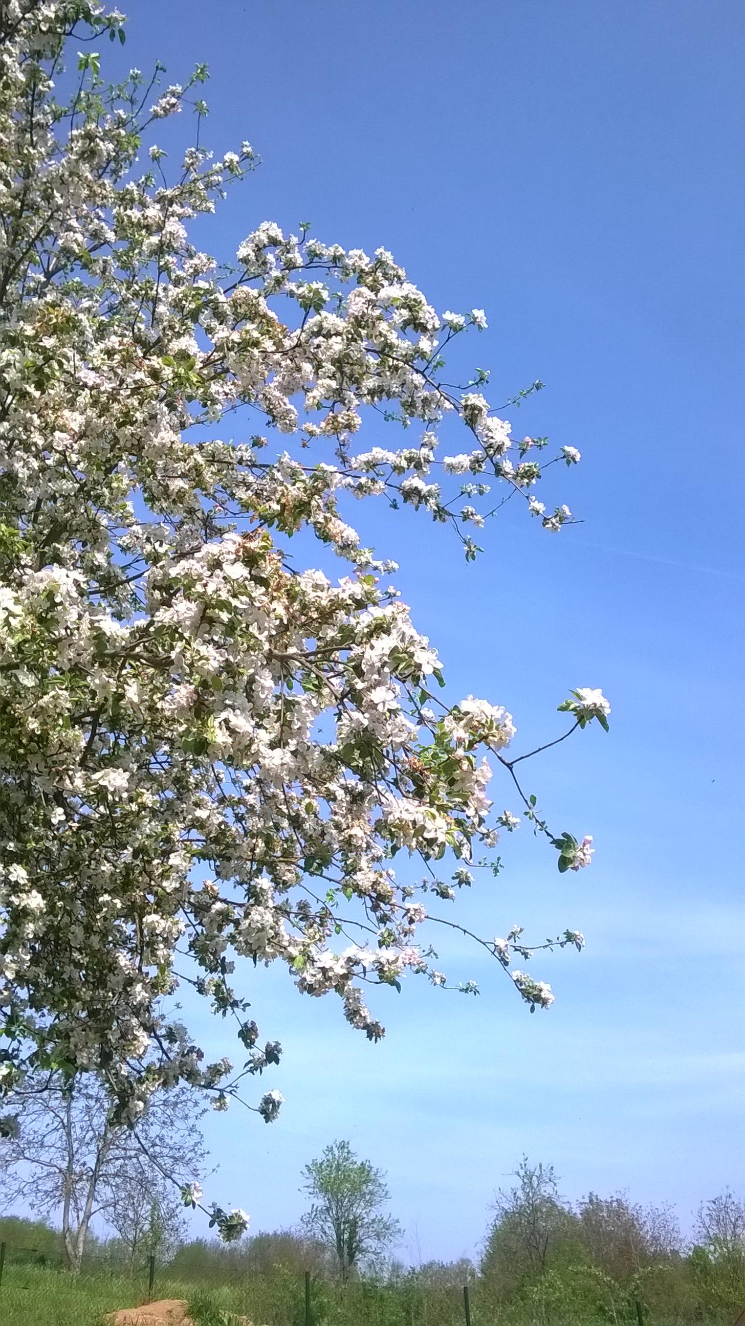 Prachtige bloesems in het voorjaar
