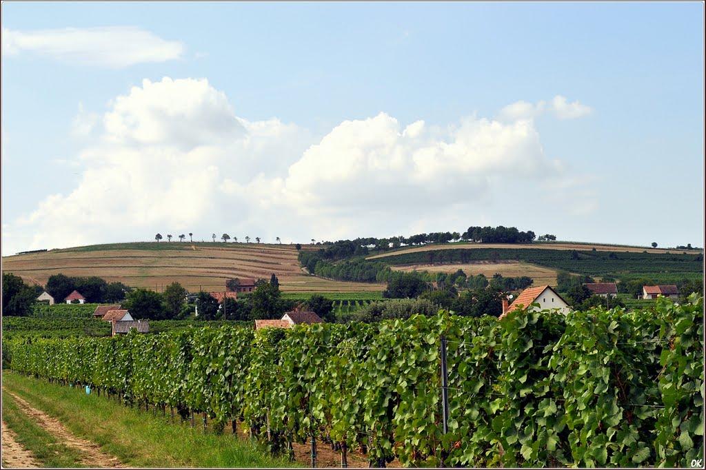 De heuvels in Zuid-Hongarije