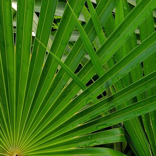 Terry_Tyer Palm Leaves -e1401646838677.j