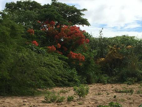 Quebrada la Mina Riverbed Trail