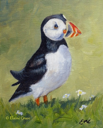 Little Puffin - Oil on Canvas