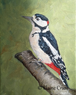 Great Spotted Woodpecker - oil on canvas