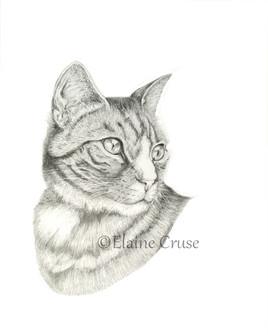 Miss Molly - Pet Portrait in Graphite