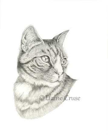 Miss Molly - Pet Portrait in Graphite