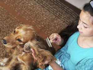 Children can't care for pets alone