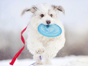 Help your dog weather the winter