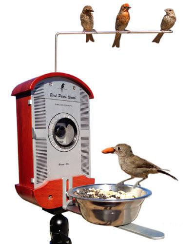 Bird Photo Booth