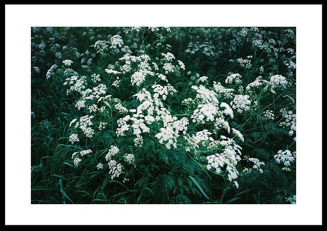 blomma___print.jpg