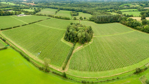 Highweald Beverages purchases second Sussex vineyard to join top 10% of UK land-under-vine owners