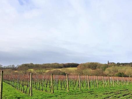 Highweald Wine announces acquisition of award-winning Sussex vineyard