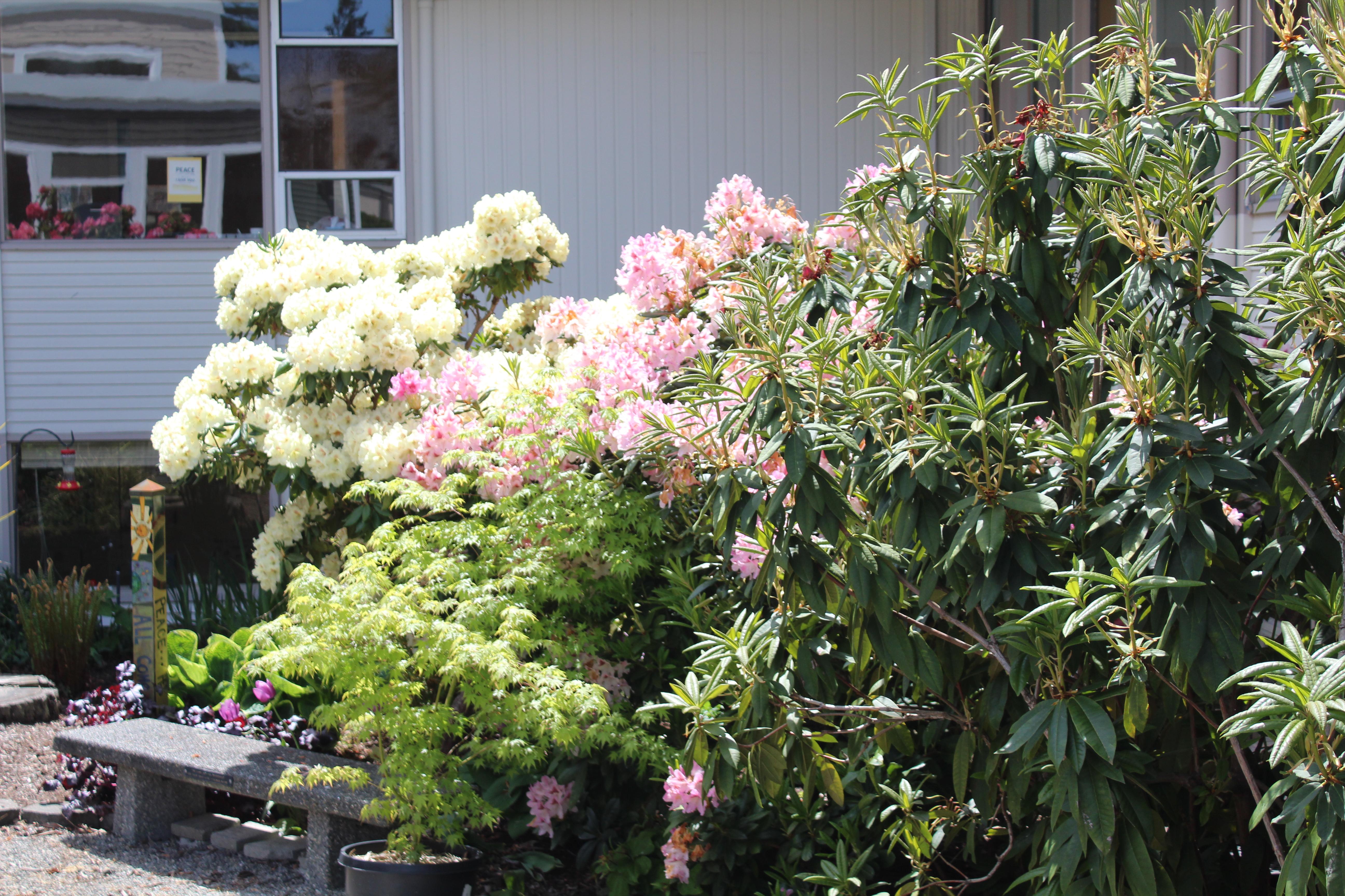 Hadden Garden