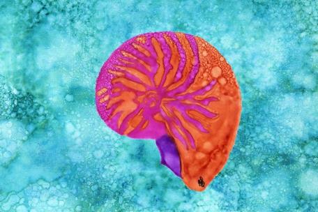 Pink Nautilus