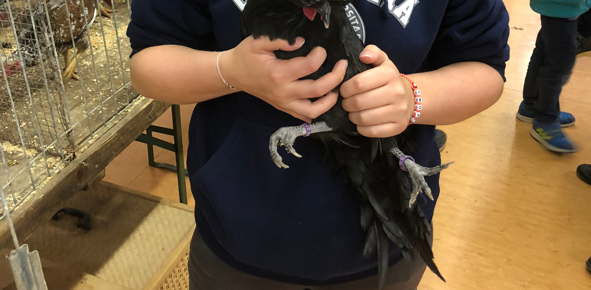 Elisa mit eines ihrer Holländer Weißhaubenhühner