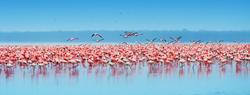 Flamingo East Africa