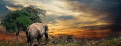 Elephant African Sky Hero Image